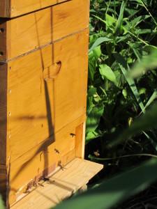 mijn eerste bijenvolkje